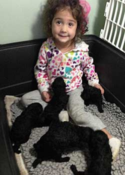 Priscilla playing with Anna's puppies
