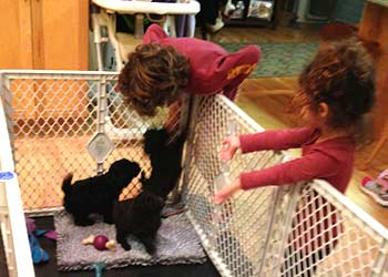 Carlo & Priscilla playing with  DEMI & GIANNI puppies